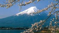 Cherry blossoms frame the magnificent Mt Fuji