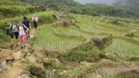 School kids trekking in Vietnamese countryside |  <i>Nick Hardcastle</i>