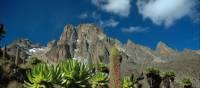 Mount Kenya with lobelia | Sue Badyari
