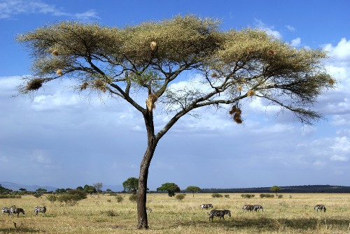 Landscapes of the Tanzanian national park, Africa&#160;-&#160;<i>Photo:&#160;Gesine Cheung</i>