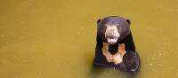 A bear enjoys a cool dip | Alex Cearns