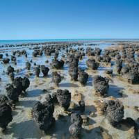 The Stromatolites at Hamelin Pool | Tourism WA