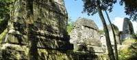 The mossy jungle paths and majestic Mayan ruins at Tikal