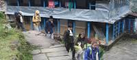 On the trail in Landruk village, Annapurna region   Brad Atwal