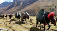 Pack horses carrying camp equipment through Jigme Dorje National Park |  <i>Gavin Turner</i>