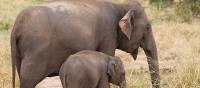 Elephants in Udawalawe | Sarath Matararachi