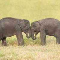 Visiting orphan baby elephants in Udawalawe | Houndstooth Studio by Alex Cearns