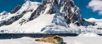 A leopard seal rests on an iceberg in Antarctica | Richard I'Anson