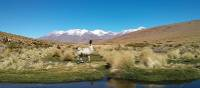 Alpaca in the Bolivian altiplano