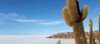 Famous cactus island of Salar de Uyuni | Karina Merkel
