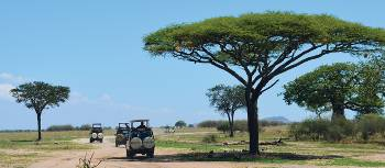 Safari jeeps roam Tarangire National Park in search of wildlife | Chloe Ryan